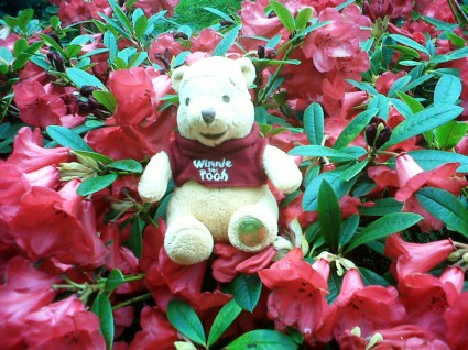 Winnie sitting among the rhododendrons